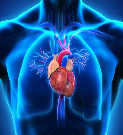 Thumbnail-Cardiovascular-Demcon